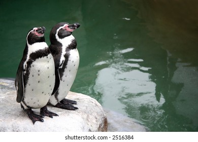 Two penguins on a rock with their eyes closed