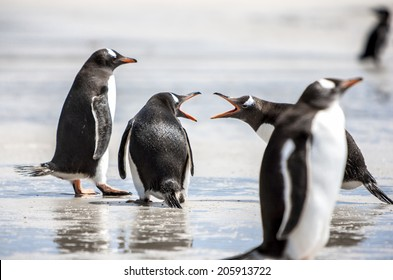 Two penguins seem to discuss on the beach. The first argues strongly, the second does not seem to care while the third is wise and above this.