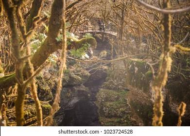 Two people on the wooden bridge in mountain forest with exotic trees in autumn season in Georgia. Martvili canyon. Okatse canyon