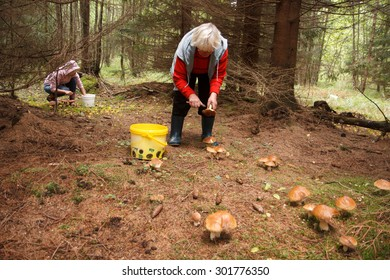 Two people picking up mushrooms in a forest