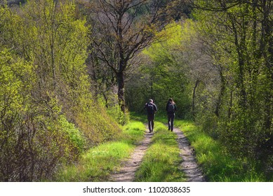 Two people walking on a forrest path