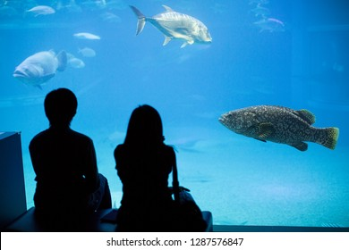Two people are watching and enjoying underwater life in Osaka Aquarium Kaiyukan.