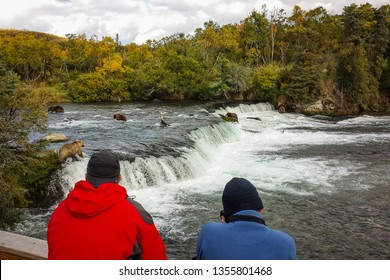 Two people watching five bears on Brooks falls, Alaska