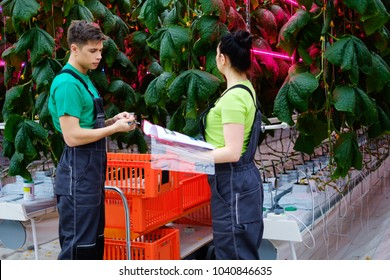 Two people working in a greenhouse.