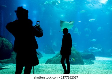 Two person take a photo in front of the glass of acquarium, silhouettes of people in front of the lisbon oceanarium tanks