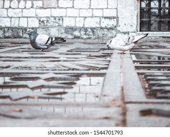 Two pigeons drinking water on photography