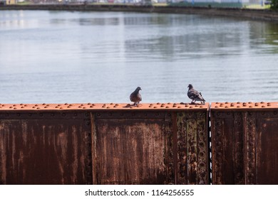 Two pigeons on rusty beam with water in background.