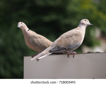 Two pigeons on a wall in the sun
