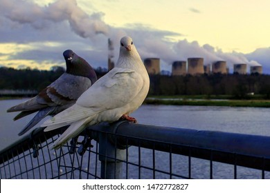 Two pigeons perched on fence by river in front of power station during evening sunset