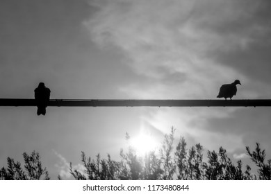 Two pigeons sit on an electricity cable, silhouetted by the sun.