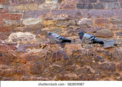 Two Pigeons siting on ancient brick wall