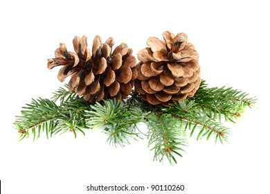Two pine cones with branch on a white background.