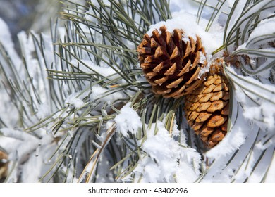 Two Pine Cones covered in major snow.
