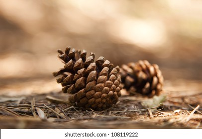 Two pine cones fallen on the ground in the forest.