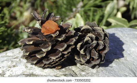 Two pine cones with a red flower petal on stones with blurred green background