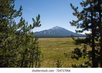 Two pine trees frame Mount Bachelor and a Meadow on the Cascade Lakes National Scenic Byway, near Bend Oregon on a sunny day.