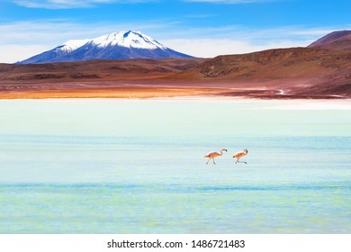 Two pink flamingos in the high-altitude lagoon on plateau Altiplano, Bolivia.