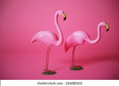 Two  pink flamingos in studio