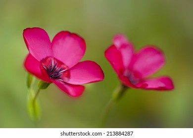 two pink flowers against a green background