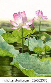 Two Pink Lotus Blossoms. Watercolor illustration, painting, of tropical flowers with lily pads on a pond with reflections.