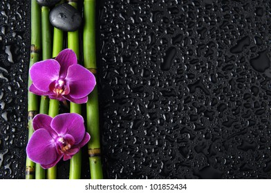 Two pink orchid and zen stones and thin bamboo grove