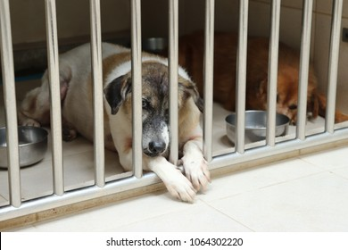 Two pitiful mongrel/crossed breed homeless dogs, stray dogs staying together in one stainless boarding kennel at veterinary hospital/Pet clinic.