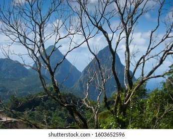 The Two Pitons mountains named Gros Piton and Petit Piton viewed through trees on Caribbean Island of Saint Lucia. Image