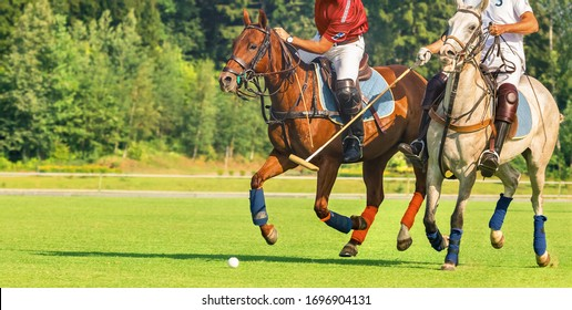 Two players in horse polo running into attack. Moment before the hammer strikes the ball. Summer season, green cut lawn, sunny day. Banner and Label Size