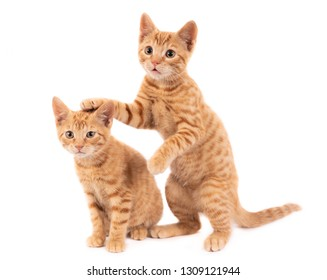 Two playful ginger kittens on white.