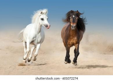 Two pony run fast on desert dust