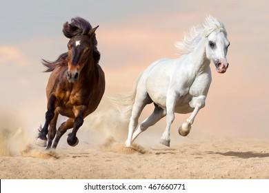 Two pony run gallop in desert