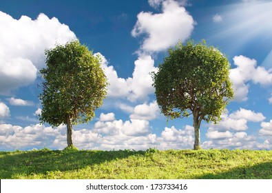 Two poplar trees on a green meadow  on the sky background.