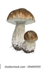 Two porcino mushrooms (Boletus edulis) - isolated white (no background)