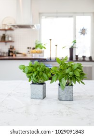 Two pots with Fresh herbs with kitchen interior in the background
