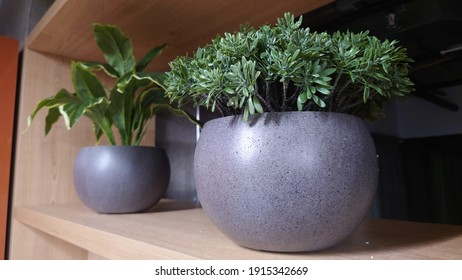Two pots of plants are on a wooden shelf. There are two pots of plants on a wooden shelf.