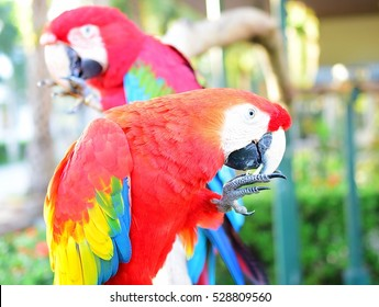 Two pretty macaw parrots