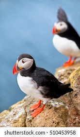 Two Puffins standing on a cliff. Latrabjarg, West fjords of Iceland.