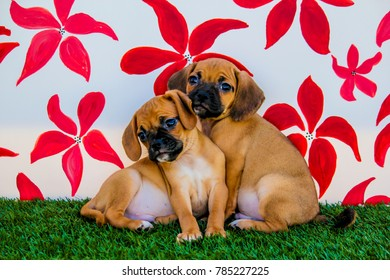 Two Puggle Puppies Snuggling in front of a Background with Hand-painted Red Flowers