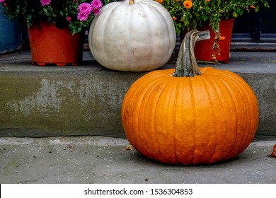 Two pumkins, one white and one orange on a grey foreground and black background, with daisy flowers, copy space around the pumpkins, vertical format