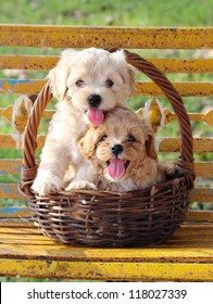 Two puppies in basket