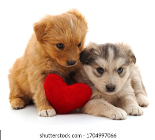 Two puppies and heart isolated on a white background.