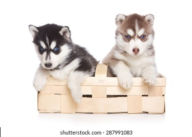 Two puppies Siberian Husky sitting in a box paws hanging out and looking at the camera (isolated on white)