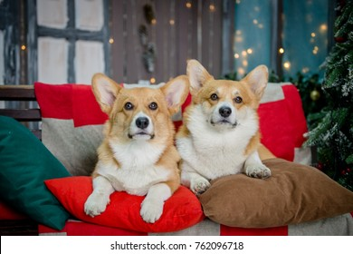 Two puppies sitting on a bench on a porch with Christmas lights in the background looking up