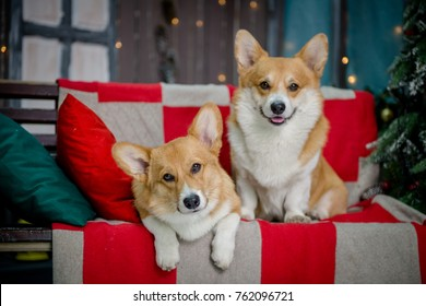 Two puppies sitting on a bench on a porch with Christmas lights in the background looking straight