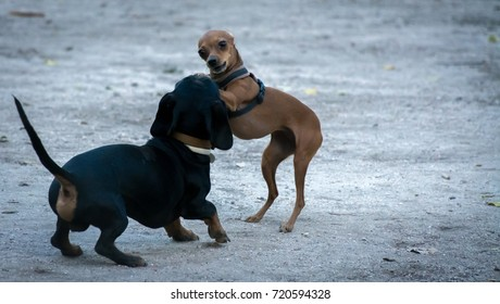 Two puppy dogs playing outdoors some sort of tag game making weird and funny positions and faces like karate.