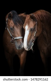 two quarter horses sey hello