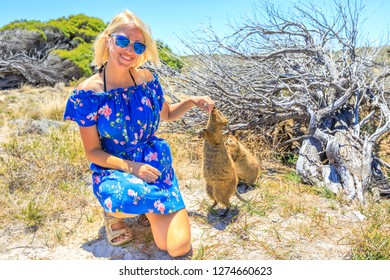 Two Quokka sniffing girl hand in a sunny day outdoors, summer holidays, Australia. Smiling blonde caucasian tourist woman interacts with curious Quokka at Rottnest Island, Western Australia.