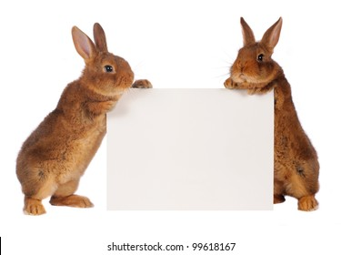 two rabbit with sheet for a text writing