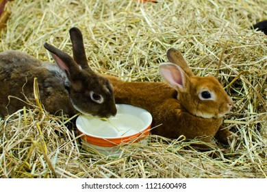 Two Rabbits Are Repose In The Rice Straw