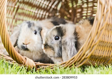 two rabbits sitting in a basket outside in the garden